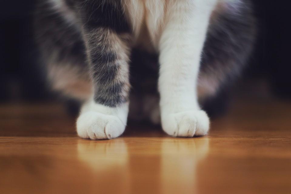 horké bílé kočička fotky anime xxx videa zdarma