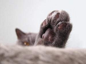 nohy nohy kočička