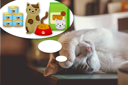 Obrázky mokré kočičky